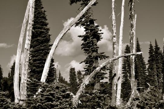 Mt. Rainier Seattle travel, expat blog, travel blog