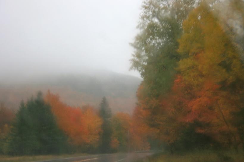 Maine leaves, leaf peeping, travel blog