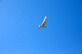 seagulls-seattle