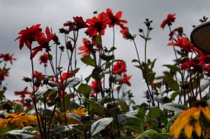 Victoria-travel-Buchart-Gardens
