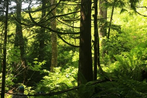 A tree photo