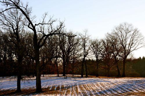Chicago Travel Morton Arboretum