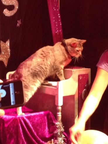 cat-playing-piano-acrocats