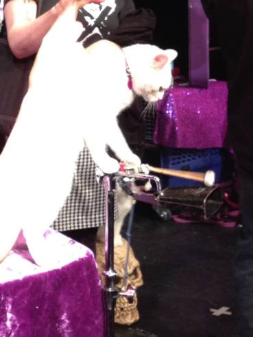 acrocats-caturday-cat-cirus