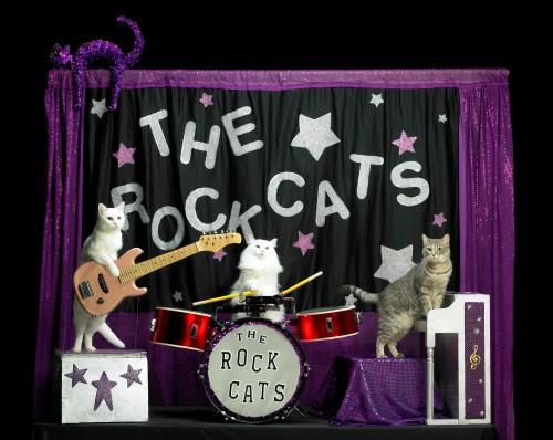 acrocats-cat-circus-seattle