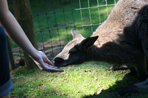 Seattle-travel-petting-zoo