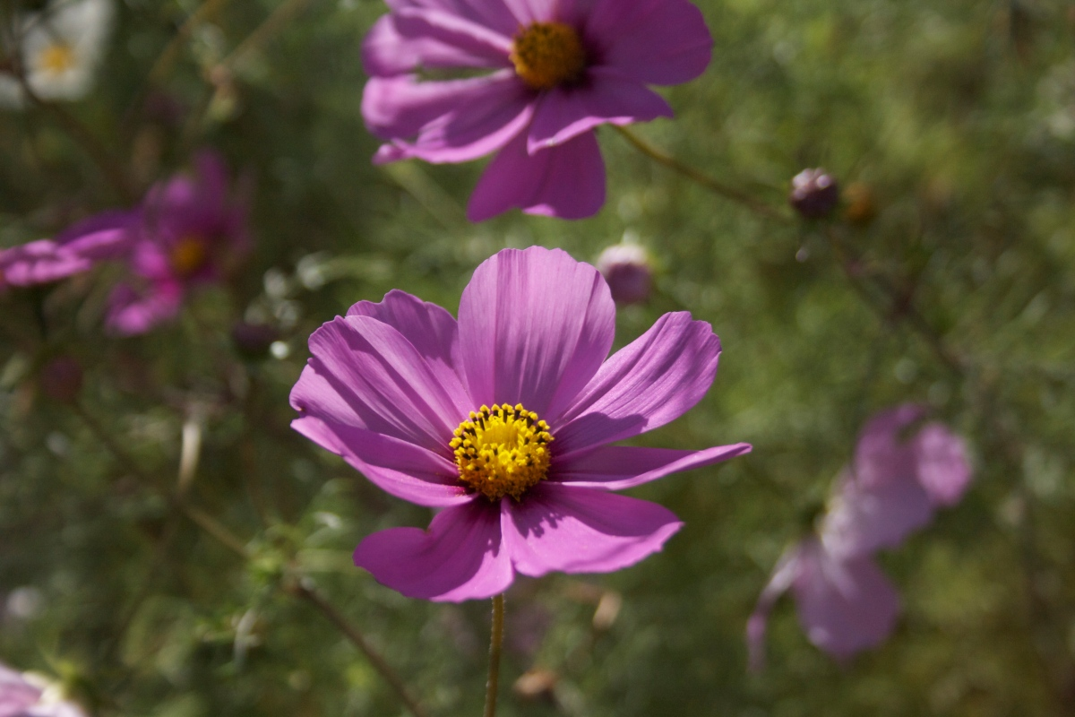 Flowers-New-Mexico