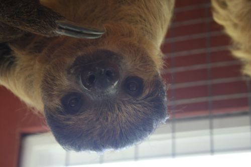 fav-photo-sloth