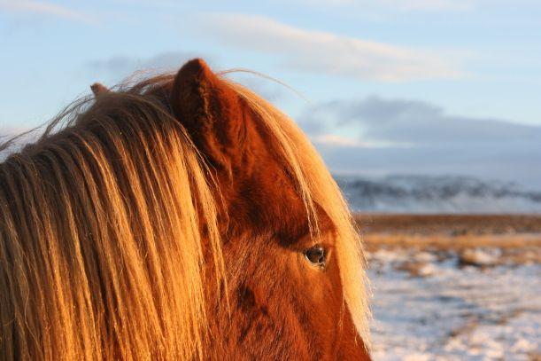 img_1466-horseofcourse