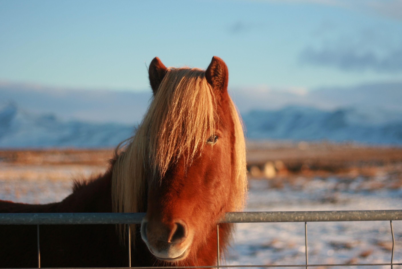 img_1481-horse